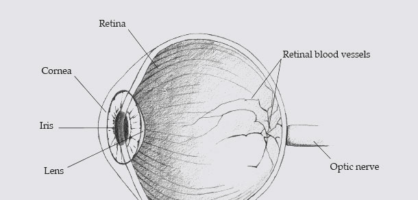 Iris vs. retina biometrics yes, they really are different